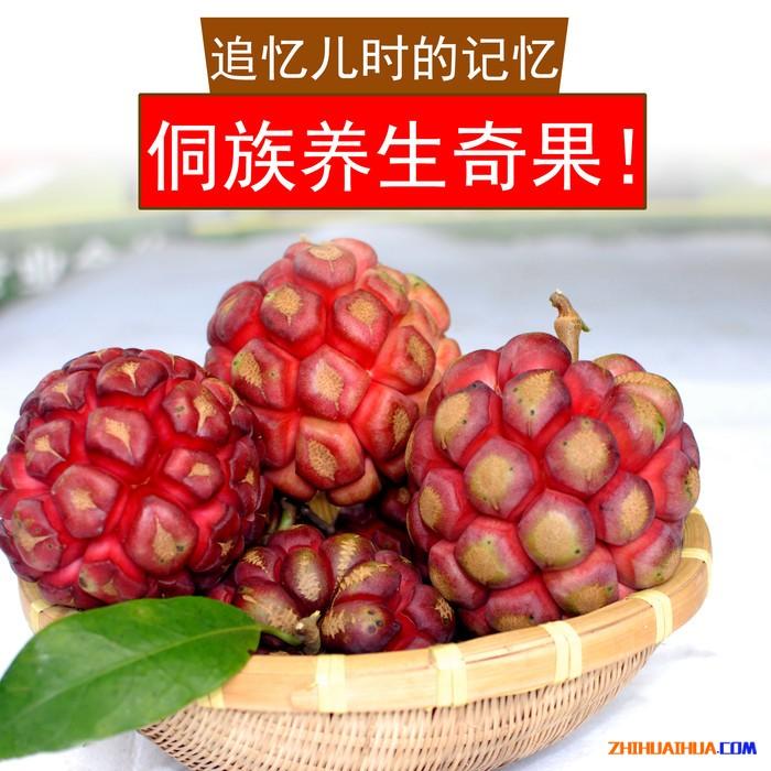 现摘新鲜黑老虎果通道特产养生奇果药用观赏食用果