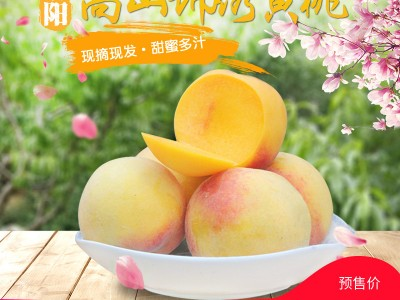 湖南麻阳黄桃新鲜大桃子当季水果水密桃现摘