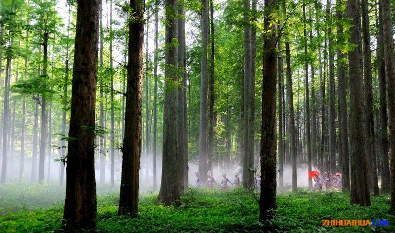 靖州排牙山森林公园