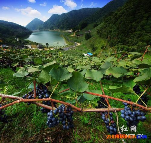 中方县桐木葡萄沟特色小镇项目