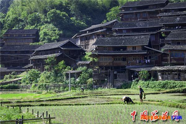 靖州县地笋•九龙叠翠道古今