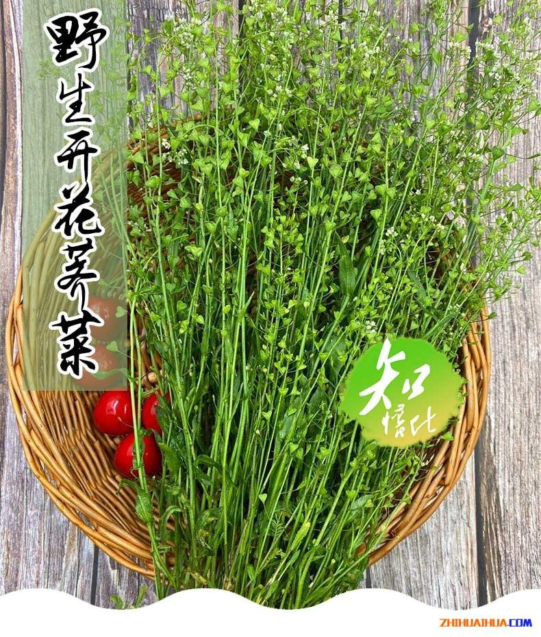 三月三,地菜煮鸡蛋-野生开花荠菜